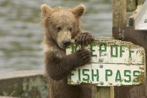 bear-680334_1280