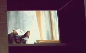 cat-56779_1920