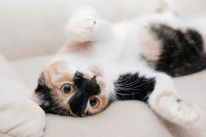 cat-649164_1280