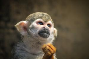 monkey-721108_1280